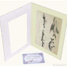 Arte: 1878 - PECES ICTIOLOGÍA GRABADO ANTIGUO ORIGINAL CON PASSEPARTOUT DOBLE. Lote 136393886