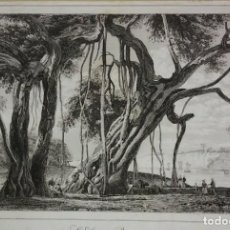 Arte: GRABADO INDIA ÁRBOL SAGRADO BANIAN BANYAN LEMAITRE DIREXIT SIGLO XIX CON PASPARTÚ BISELADO. Lote 140512994