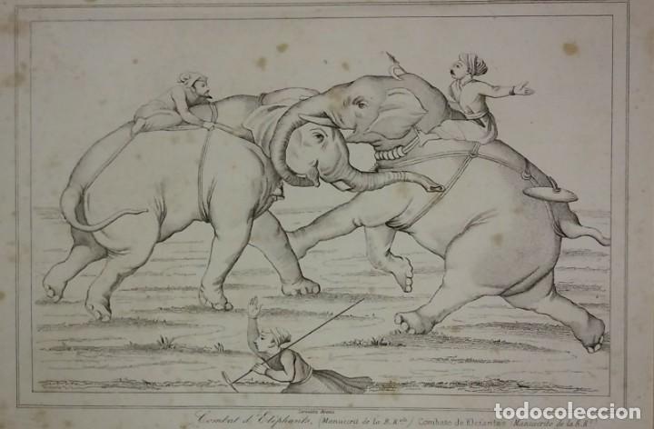 GRABADO INDIA COMBATE DE ELEFANTES INDIA LEMAITRE DIREXIT SIGLO XIX CON PASPARTÚ BISELADO (Arte - Grabados - Modernos siglo XIX)