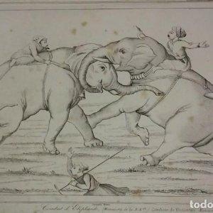 Grabado India Combate de elefantes India Lemaitre Direxit Siglo XIX con Paspartú biselado