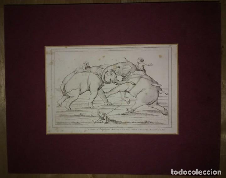 Arte: Grabado India Combate de elefantes India Lemaitre Direxit Siglo XIX con Paspartú biselado - Foto 2 - 140514354