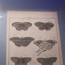 Arte: ANTIGUO GRABADO HISTOIRE NATURALLE , INSECTES -NYMPHES AVEUGLES 1734-1742 GRAVÉES PAR SOMONEA . Lote 140706794