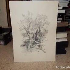 Arte: EXTRAORDINARIO GRABADO DE OLIVO MALLORQUÍN.FIRMA ORIGINAL DEL ARISTA EN LÁPIZ EN LA PARTE INFERIOR.. Lote 142225454
