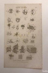 Grabado Historia natural. Francia. Siglo XVII. 14x23 cm