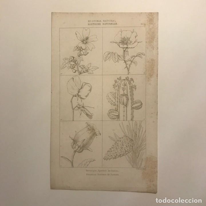 GRABADO HISTORIA NATURAL. FRANCIA. SIGLO XVII. 14X23 CM (Arte - Grabados - Contemporáneos siglo XX)