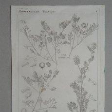 Arte: LOTE DE 5 GRABADOS EN PLANCHA DE COBRE POR FRANZ ADAM SCHNORR (1794-1859) PLANTA FUMARIA. Lote 148161670