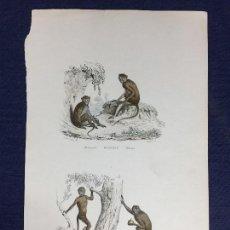 Arte: GRABADO A COLOR MONOS MACACO SAPAJOUS GUENONS AMÉRICA PUBLICADO POR FURNE HISTORIA NATURAL S XIX. Lote 149956106