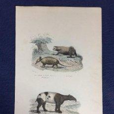 Arte: GRABADO A COLOR HISTORIA NATURAL PUBLICADO POR FURNE ENCICLOPEDIA BUFFON S XIX. Lote 151057222