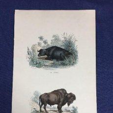 Arte: ANTIGUO GRABADO A COLOR HISTORIA NATURAL BISONTE BÚFALO PUBLICADO POR FURNE BUFFON S XIX. Lote 151344770