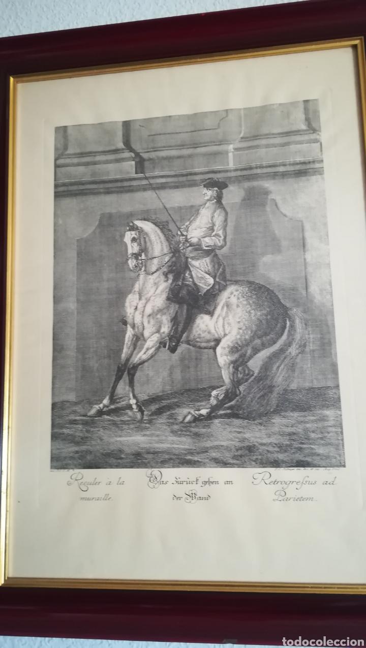 ANTIGUO GRABADO DE JOHAN ELÍAS RIDINGER, SOBRE 1750 (Arte - Grabados - Antiguos hasta el siglo XVIII)