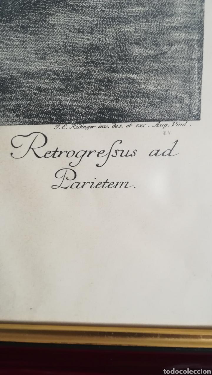 Arte: Antiguo grabado de Johan Elías Ridinger, sobre 1750 - Foto 3 - 152166861