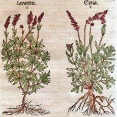 Arte: LAVANDA Y CANTUESO HIERBAS Y PLANTAS.GRABADO ORIGINAL DE DAVID KANDEL.OBRA DE JEROME BOCK.. Lote 155305362