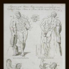 Arte: 1789 LAS PROPORCIONES DEL CUERPO MASCULINO DESNUDO HERCULES LACOONTE MUSCULOS HUMANO GAY INT.. Lote 155991846