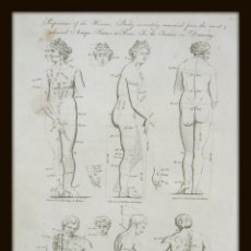 Arte: 1789 LAS PROPORCIONES DEL CUERPO PERFECTO VENUS Y ANTÍNOO BELLEZA MUSCULOS DESNUDOS GAY INT.. Lote 155993690