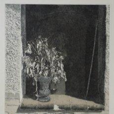 Arte: MALTE SARTORIUS: FLORES SECAS, 1983 / FIRMADO Y NUMERADO A LÁPIZ. Lote 160026558