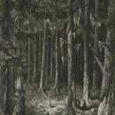 Arte: GUSTAVE DORÉ, XILOGRAFÍA INFOLIO 1870. ATALA, CHATEAUBRIAND. SANTUARIO DEL PINAR. GRABADO MADERA. Lote 160582038