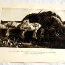Arte: HOJA EXTRAÍDA DE LIBRO CON DOS GRABADOS, DE R.C. PETER Y LEONARD R. SQUIRRELL. Lote 160583966