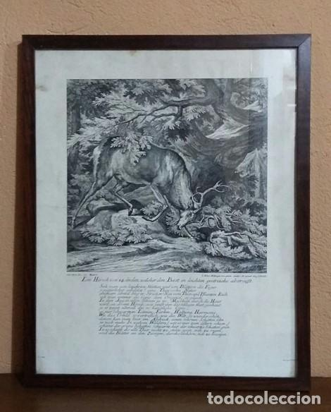 REPRODUCCIÓN GRABADO CIERVO. J. ELIAS RIDINGER. CON MARCO Y CRISTAL. (Arte - Grabados - Contemporáneos siglo XX)