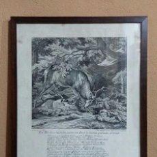 Arte: REPRODUCCIÓN GRABADO CIERVO. J. ELIAS RIDINGER. CON MARCO Y CRISTAL.. Lote 162202838