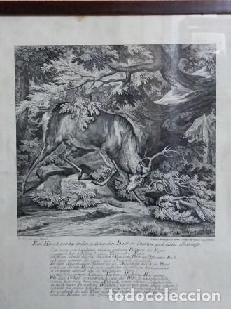 Arte: Reproducción grabado ciervo. J. Elias Ridinger. Con marco y cristal. - Foto 2 - 162202838