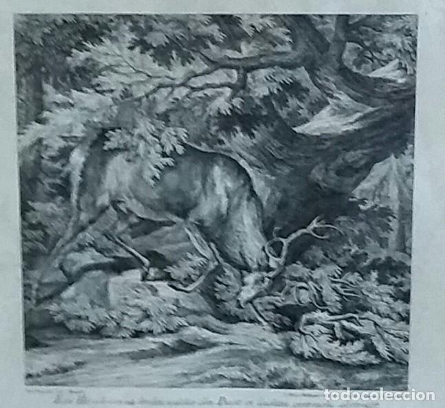 Arte: Reproducción grabado ciervo. J. Elias Ridinger. Con marco y cristal. - Foto 3 - 162202838