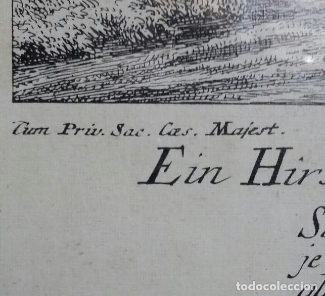 Arte: Reproducción grabado ciervo. J. Elias Ridinger. Con marco y cristal. - Foto 5 - 162202838