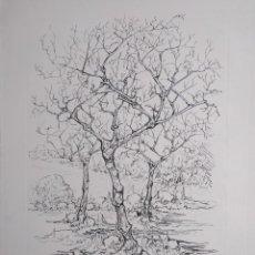 Arte: TOMÁS HARRIS RODRIGUEZ. MALLORCA. Lote 165320258
