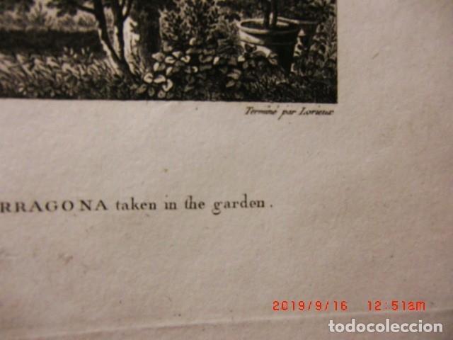 Arte: Lote de antiguos grabados - Foto 12 - 173905488