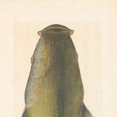 Arte: CABEZA DE MUGLE, JUAN BAUTISTA BRU S. XVIII.. Lote 183255080