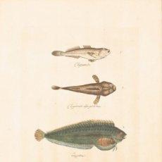 Arte: CHAPARRUDOS Y LAGARTIÑAS, JUAN BAUTISTA BRU, S.XVIII.. Lote 183259673