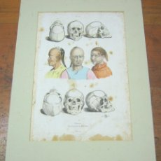 Arte: RAZAS HOMBRES CAUCÁSICAS Y MONGÓLICAS - GRABADO COLOR S. XIX - CRANEOS. Lote 184794023