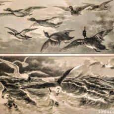 Arte: PRECIOSO GRABADO MODERNISTA CIRCA 1900 ANTIQUE UNIQUE. Lote 188677362