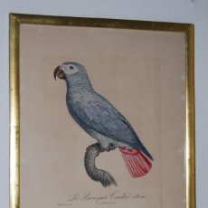 Arte: GRABADO LORO - LE PERROQUET CENDRÉ - JACQUES BARRABAND PINX.. Lote 189701476