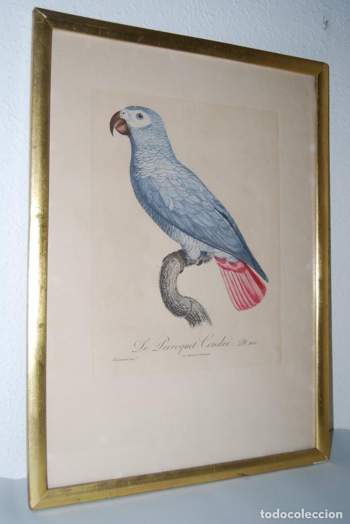 Arte: GRABADO LORO - LE PERROQUET CENDRÉ - JACQUES BARRABAND PINX. - Foto 9 - 189701476