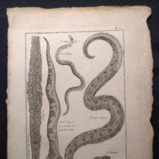 Arte: HISTOIRE NATURELLE. BENARD. OPHYOLOGIE. PL. 8. LE CALEMAR. LE CÉRASTE. 1790 H. SERPIENTES. OFIOLOGÍA. Lote 190708258