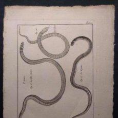 Arte: HISTOIRE NATURELLE. BENARD. OPHYOLOGIE. PL. 12. LA TÊTE-NOIRE. LE REGINE. 1790 H. SERPIENTES.. Lote 190708261