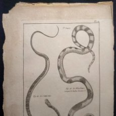 Arte: HISTOIRE NATURELLE. BENARD. OPHYOLOGIE. PL. 21. LE SATURNIN. 1790 H. SERPIENTES. OFIOLOGÍA.. Lote 190708271