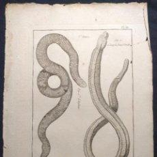 Arte: HISTOIRE NATURELLE. BENARD. OPHYOLOGIE. PL. 33. L'AMPHISBENE BLANCHE. 1790 H. SERPIENTES. OFIOLOGÍA.. Lote 190708360