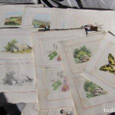Arte: 15 LAMINAS LITOGRAFIAS PARA COLOREAR. MONROCQ PARIS MODELES DE COLORIS. Lote 194513910