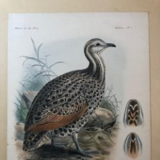Arte: HISTORIA NATURAL. LITOGRAFÍA COLOREADA. MISSION DU CAP HORN. 1882-1883. Lote 195267897