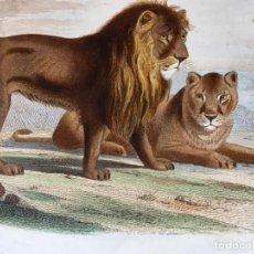 Arte: LITOGRAFÍA GRABADO COLOR - LEÓN Y LEONA - 1856 - 235X148 MM - ORIGINAL. Lote 197994443