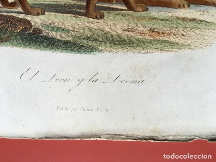 Arte: LITOGRAFÍA GRABADO COLOR - LEÓN Y LEONA - 1856 - 235x148 mm - ORIGINAL - Foto 3 - 197994443