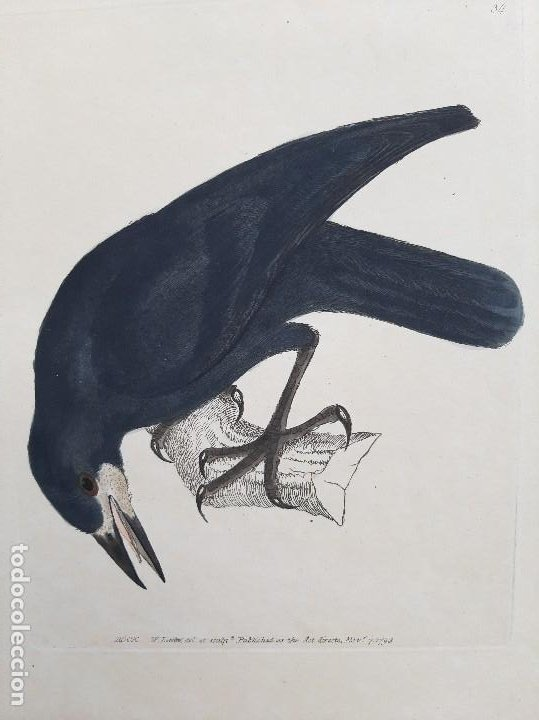Arte: Pareja de grabados. s. XVIII - Foto 3 - 36462699