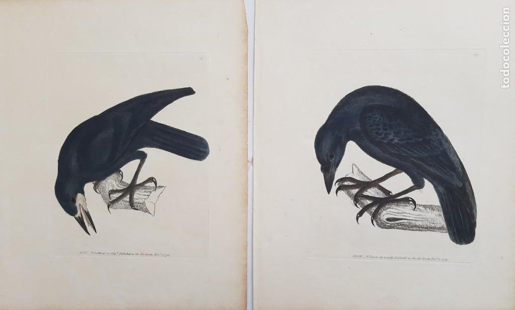 Arte: Pareja de grabados. s. XVIII - Foto 5 - 36462699