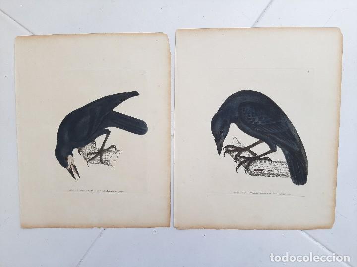 Arte: Pareja de grabados. s. XVIII - Foto 6 - 36462699