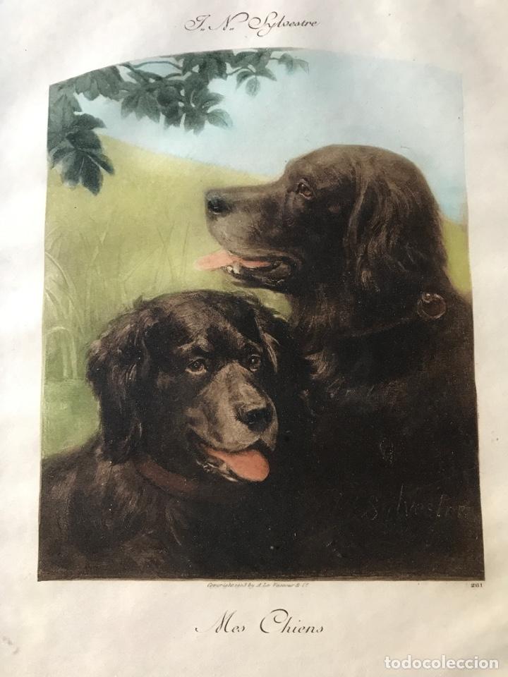 Arte: Grabado antiguo de unos perros de caza - Foto 4 - 204436196
