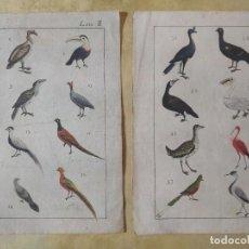 Arte: LOTE 4 GRABADOS DE CIENCIAS NATURALES (S XVIII- PRINCIPIOS XIX?). Lote 208827677