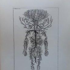 Arte: 2 FACSÍMILES DE GRABADOS DE ANATOMÍA Y MEDICINA. Lote 212127945