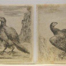 Arte: STEFANO DELLA BELLA. AGUILAS. HACIA 1655. AGUAFUERTES. FIRMADOS EN LA PLANCHA 12 X 14,8 CM.. Lote 214628342