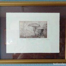 Arte: GRABADO DE LA ARTISTA MARISA ESTEBAN. SETAS AMARILLIA MERELLA . 4/25 AÑO 2002. PERFECTO. Lote 216542298